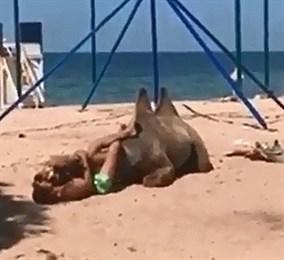 «Вот это любовь:» На кубанском пляже верблюд нежился в объятиях мужчины