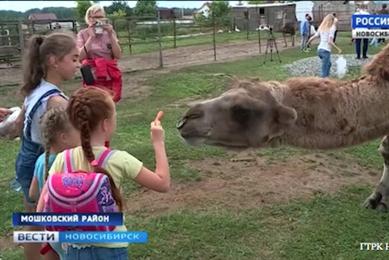 Деревенский туризм: на эко-ферме в Мошковском районе готовы удивлять гостей