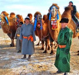 Фестиваль верблюдов пройдет в Монголии