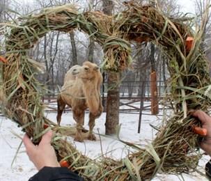 Верблюду Каметолу сотрудники Воронежского зоопарка подарили съедобную валентинку