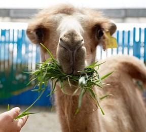 Иркутский зоосад предлагает покормить животных онлайн 21 апреля