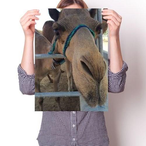 Постер - Верблюд Милашка - фото 6865