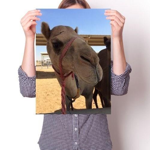 Постер - Верблюд N1 - фото 6867