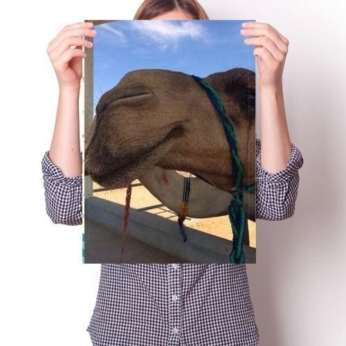Постер - Верблюд N2 - фото 6868