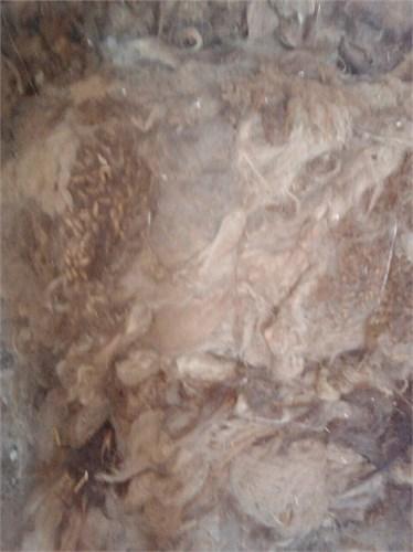 Верблюжья шерсть прессованная в брикетах - ( бурая ) Россия - фото 7223