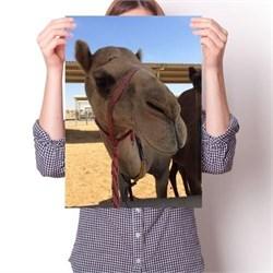Постер - Верблюд N1