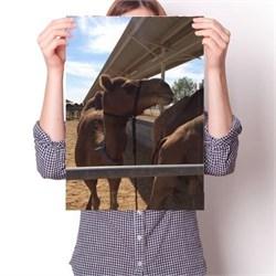 Постер - Верблюд N3